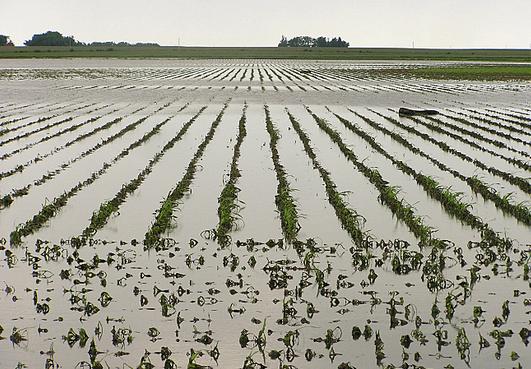1618-flooded-fields-steil