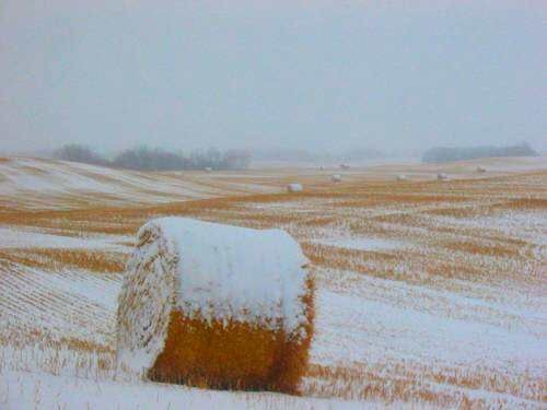 winter-scenics-canada-bales-hay-rolls-field-sno_20180411-165121_1