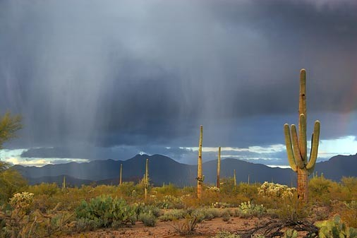 desert_rain_picture-other