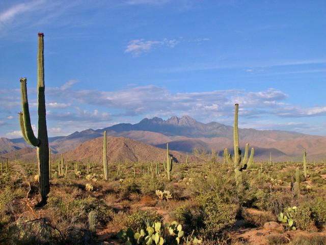 sonoran-desert-landscape