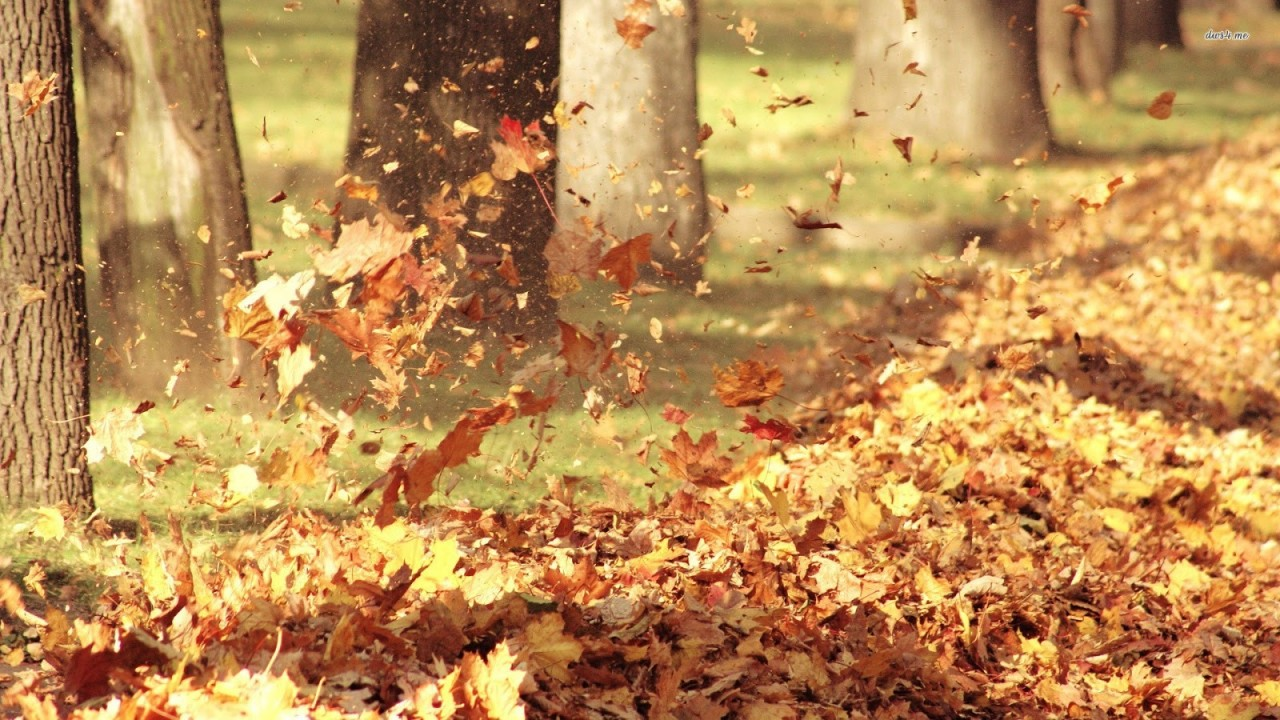 11102-foliage-blown-away-by-wind-1920x1080-nature-wallpaper